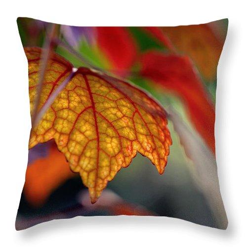 Autumn Throw Pillow featuring the photograph Mosaic Autumn by Melanie Moraga