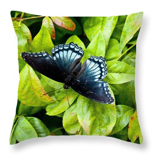 Butterfly Throw Pillow featuring the photograph Mosaic Flutterby by Sheri Bartoszek