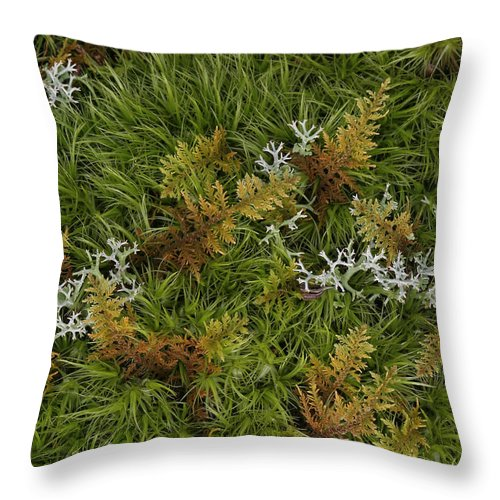 Bryophyta Throw Pillow featuring the photograph Moss And Lichen by Daniel Reed