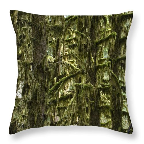 Mp Throw Pillow featuring the photograph Moss Covered Trees, Hoh Rainforest by Konrad Wothe