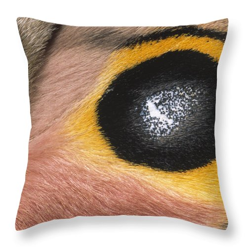 Fn Throw Pillow featuring the photograph Moth Automeris Zozine Detail Of False by Ingo Arndt