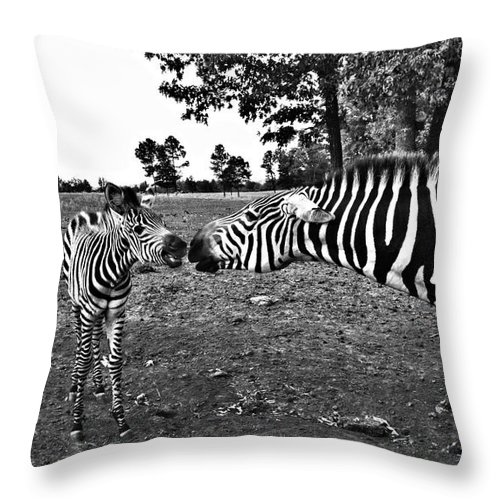 Zebras Throw Pillow featuring the photograph Mother And Child-black And White by Douglas Barnard