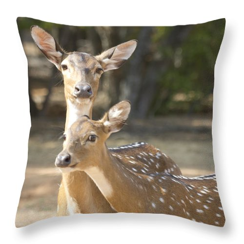 Deer Throw Pillow featuring the photograph Mother And Child V3 by Douglas Barnard