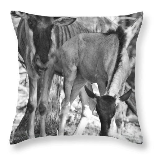 Blue Wildebeest Throw Pillow featuring the photograph Mother And Child V4 by Douglas Barnard