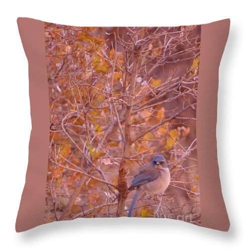 Bluebird Throw Pillow featuring the photograph Mountain Bluebird by Brandi Christon