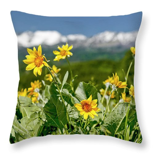 Americas Throw Pillow featuring the photograph Mountain Flower View by Roderick Bley