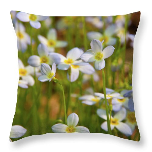 Flowers Throw Pillow featuring the photograph Mountain Flowers 5534 by Guy Whiteley