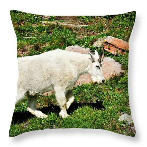 Glacier National Park Throw Pillow featuring the photograph Mountain Goat by Greg Norrell