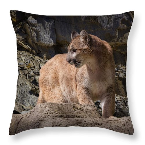 Art Throw Pillow featuring the photograph Mountain Lion On The Prowl by Randall Nyhof