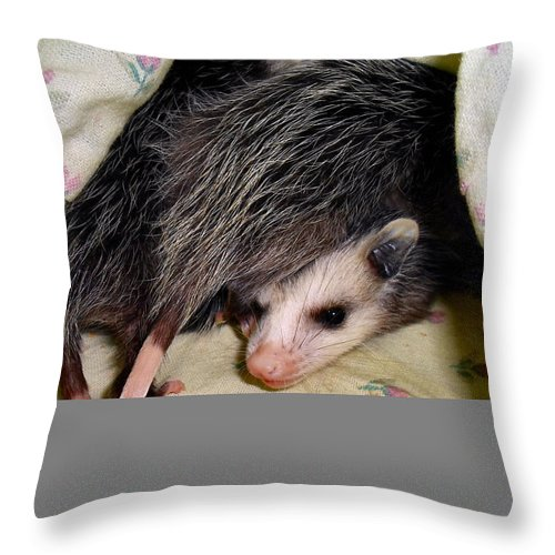 Opossum Throw Pillow featuring the photograph Move It by Art Dingo