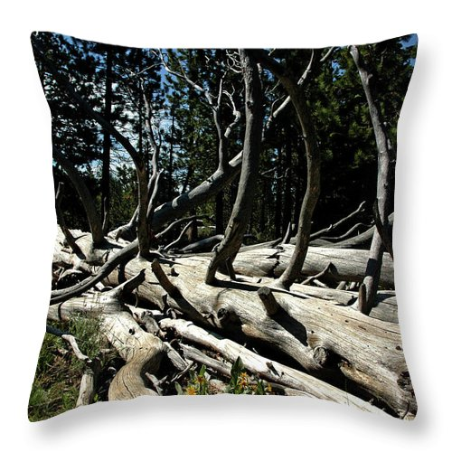 Usa Throw Pillow featuring the photograph Mules Ear Timber by LeeAnn McLaneGoetz McLaneGoetzStudioLLCcom