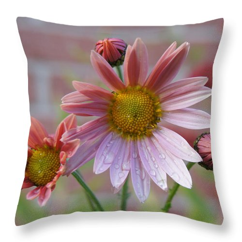 Chrysanthemum Throw Pillow featuring the photograph Mum Drops by Robert E Alter Reflections of Infinity LLC