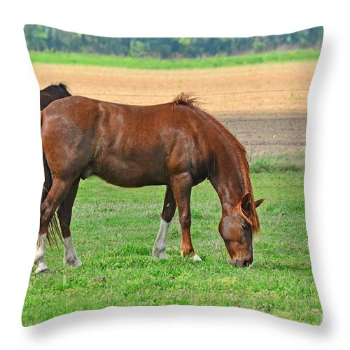 Nature Throw Pillow featuring the photograph Munching Sweet Spring Grass I by Debbie Portwood