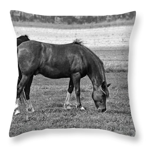 Nature Throw Pillow featuring the photograph Munching Sweet Spring Grass II by Debbie Portwood