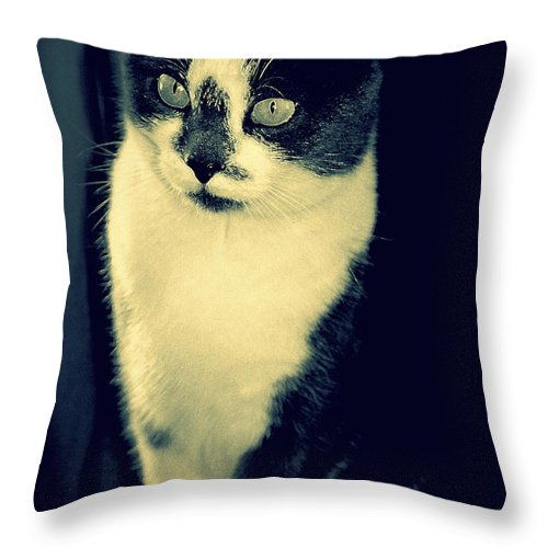 Grey White Cat Throw Pillow featuring the photograph My Guy by Diane montana Jansson