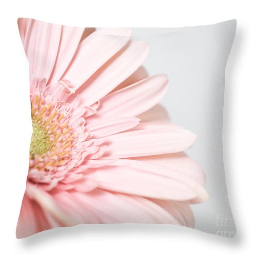 Gerber Daisy Throw Pillow featuring the photograph My Heart Opens For You by Traci Cottingham