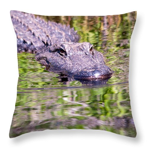 Alligator Throw Pillow featuring the photograph My Next Meal by Kenneth Albin