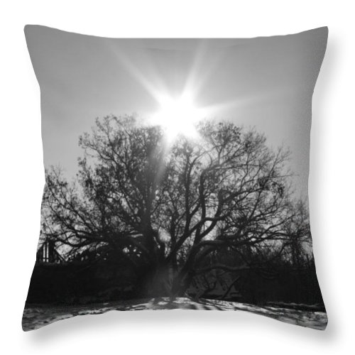 Tree Throw Pillow featuring the photograph My Shadowed Roots by The Artist Project