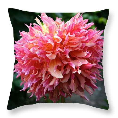 Outdoors Throw Pillow featuring the photograph Myrtle's Folly Full Bloom by Susan Herber