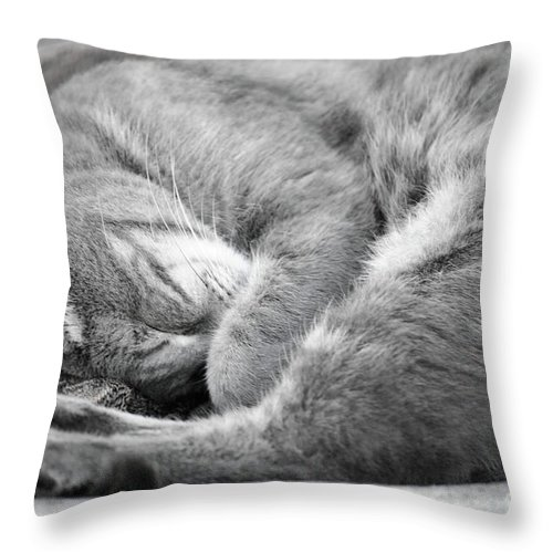 Amadar Throw Pillow featuring the photograph Nap Time by Diego Re