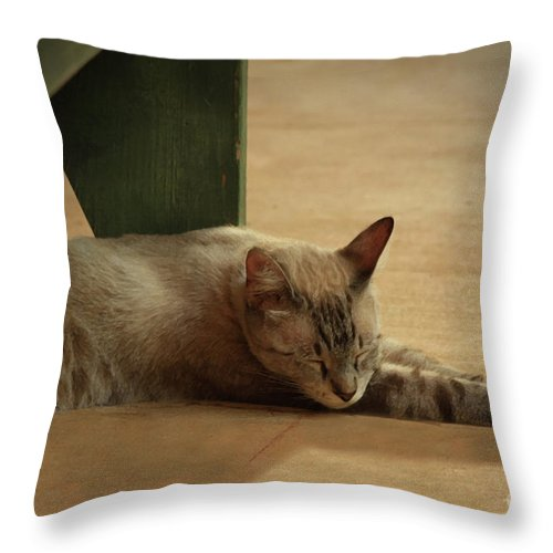 Cat Throw Pillow featuring the photograph Naping In The Shade by Kim Henderson
