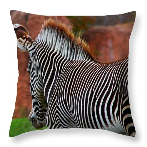 Zebra Throw Pillow featuring the photograph Nature's Barcode by Davandra Cribbie
