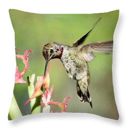 Hummingbird Throw Pillow featuring the photograph Nature's Jewels by Saija Lehtonen