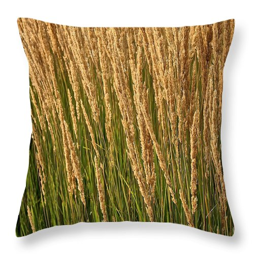 Outdoors Throw Pillow featuring the photograph Nature's Own Gold by Susan Herber