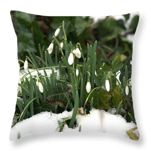 Winter Throw Pillow featuring the photograph Nearly Spring by David Birchall