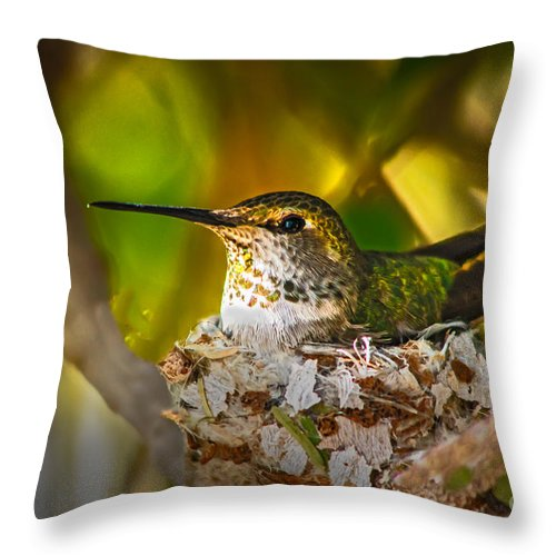 Humming Birds Throw Pillow featuring the photograph Nesting by Robert Bales