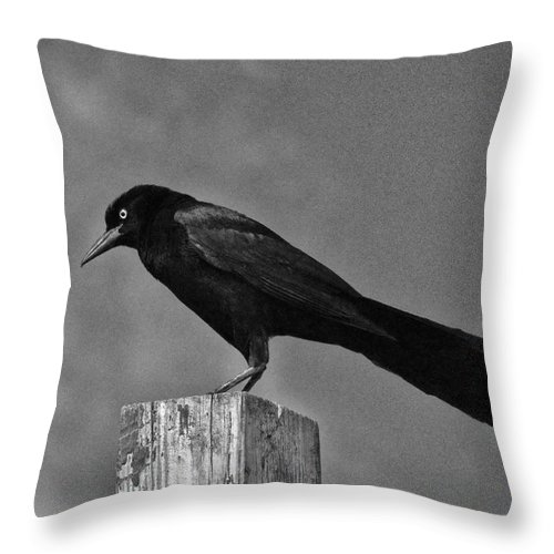 Bird Throw Pillow featuring the photograph Nevermore by David Arment