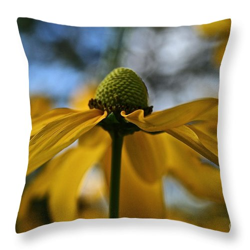 Plant Throw Pillow featuring the photograph New Cone Flower by Susan Herber