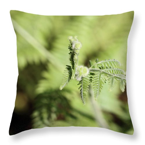Fern Throw Pillow featuring the photograph New Growth by Katherine White