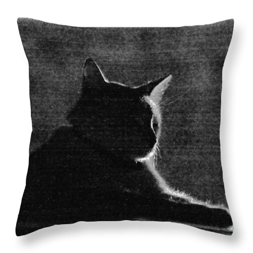 Cat Throw Pillow featuring the photograph Night Vision by Kim Henderson