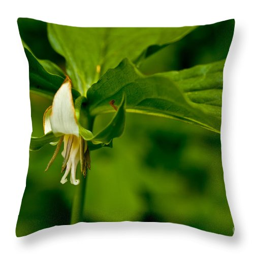 Nodding Throw Pillow featuring the photograph Nodding Trillium by Jack R Perry
