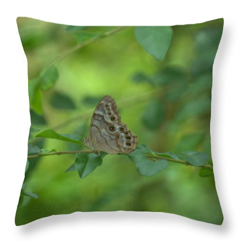 Insect Throw Pillow featuring the photograph Northern Pearly Eye Butterfly by Donna Brown
