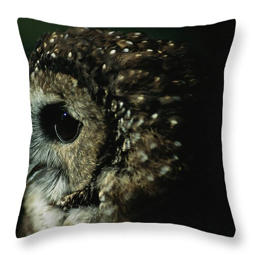Animals Throw Pillow featuring the photograph Northern Spotted Owl Strix Occidentalis by Joel Sartore