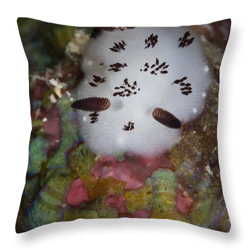 Gastropod Throw Pillow featuring the photograph Nudibranch In Raja Ampat, Indonesia by Todd Winner