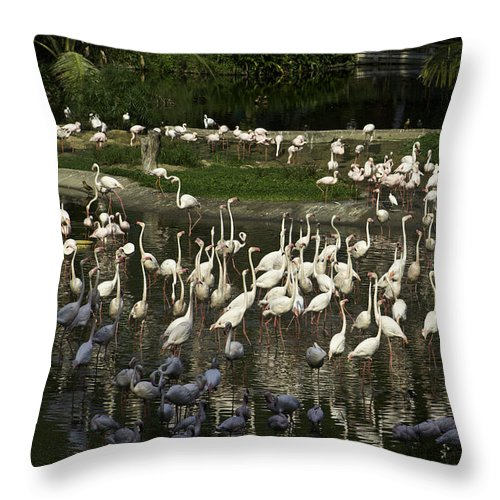 Asia Throw Pillow featuring the photograph Number Of Flamingoes Inside The Jurong Bird Park In Singapore by Ashish Agarwal
