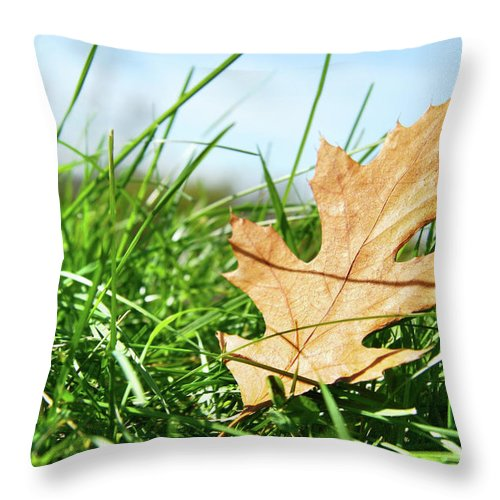 Autumn Throw Pillow featuring the photograph Oak Leaf In The Grass by Sandra Cunningham