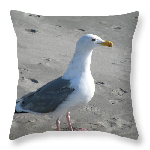 Seagull Throw Pillow featuring the photograph Ocean's Best Friend by David Quist