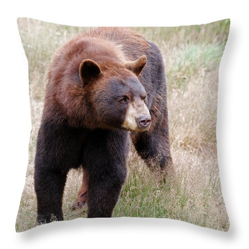 Bear Throw Pillow featuring the photograph Off I Go by Lloyd Alexander
