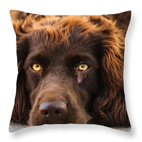 Dog Throw Pillow featuring the photograph Ol' Red by Keith Allen