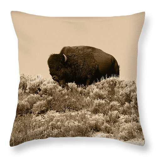 Buffalo Throw Pillow featuring the photograph Old Timer by Shane Bechler