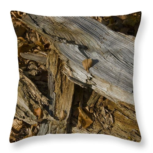 Woods Throw Pillow featuring the photograph Old Tree Trunks And Leaves Decaying by Todd Gipstein