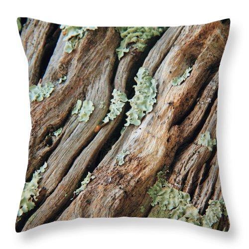 Old Wood Throw Pillow featuring the photograph Old Wood And Lichen by Roupen Baker