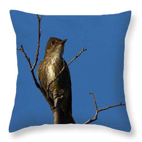 Doug Lloyd Throw Pillow featuring the photograph Olivesided Flycatcher by Doug Lloyd