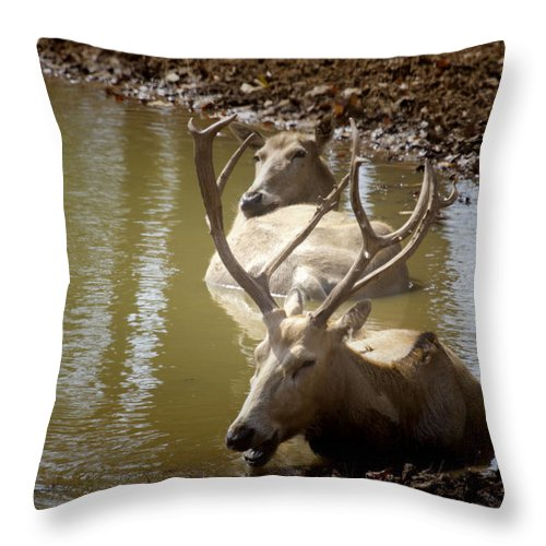 Deer Throw Pillow featuring the photograph On A Hot Summers Day by Douglas Barnard