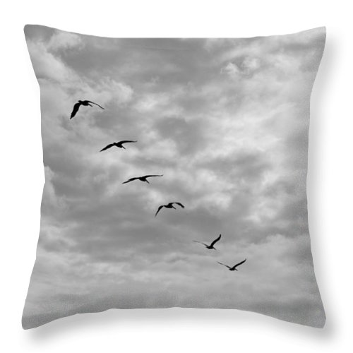 Pelicans Throw Pillow featuring the photograph On A Mission - Black And White by Suzanne Gaff