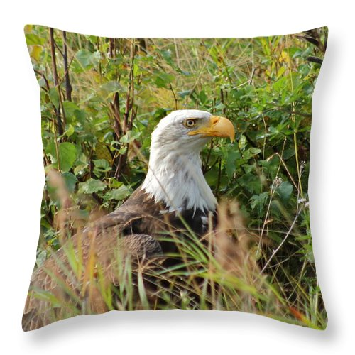 Eagle Throw Pillow featuring the photograph On The Hunt by Rick Monyahan